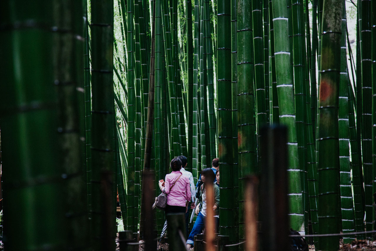 Hokoku-ji - The Bamboo temple in Kamakura